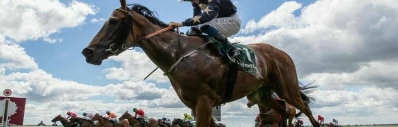 Сколько в лошади лошадиных сил?