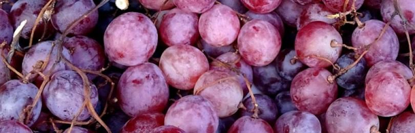 Названы фрукты и ягоды, которые нельзя сочетать с алкоголем